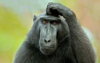 Monkey-Head-Scratcher